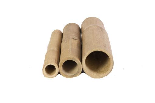 Cañas-Bambú-Guadua2